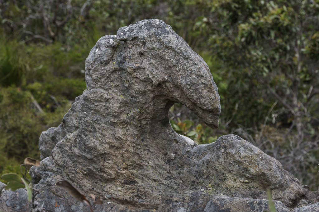 curved-sandstone-signal-peak-grampians-national-park