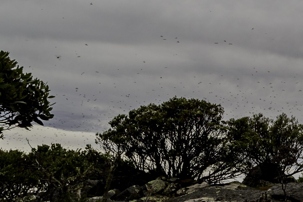 horse-flies-atop-signal-peak-grampians-national-park