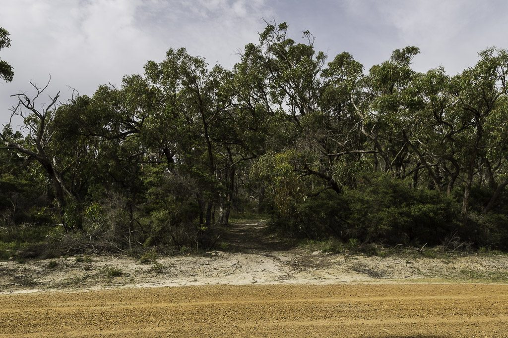 track-off-cassidy-gap-road-grampians
