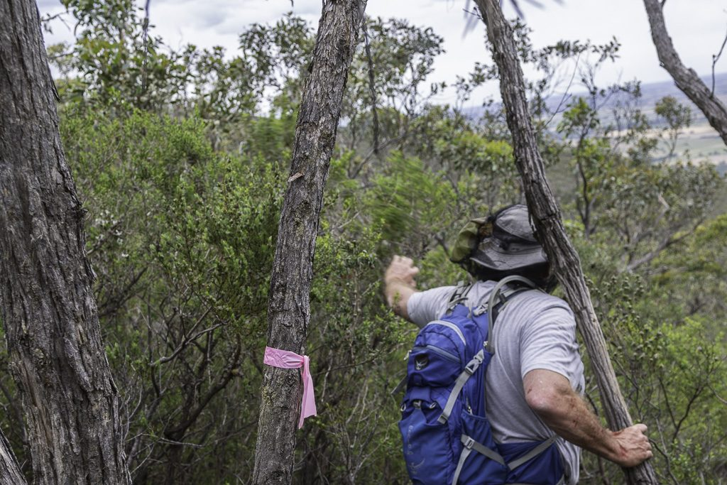 trees-tape-signal-peak-grampians-national-park