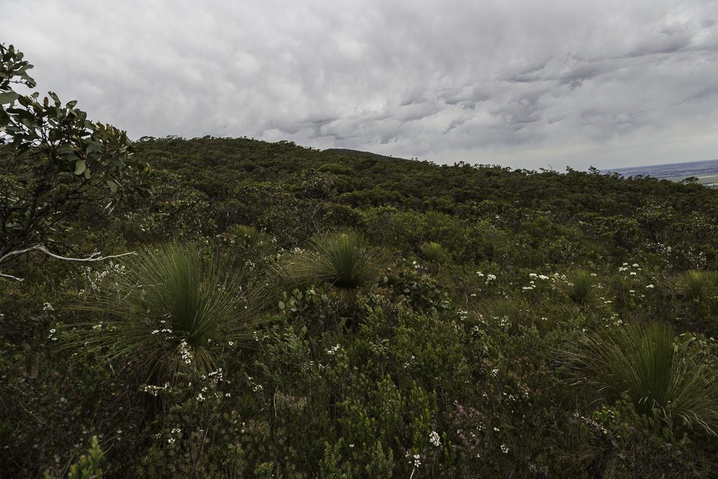 bush-descent-signal-peak-grampians-national-park