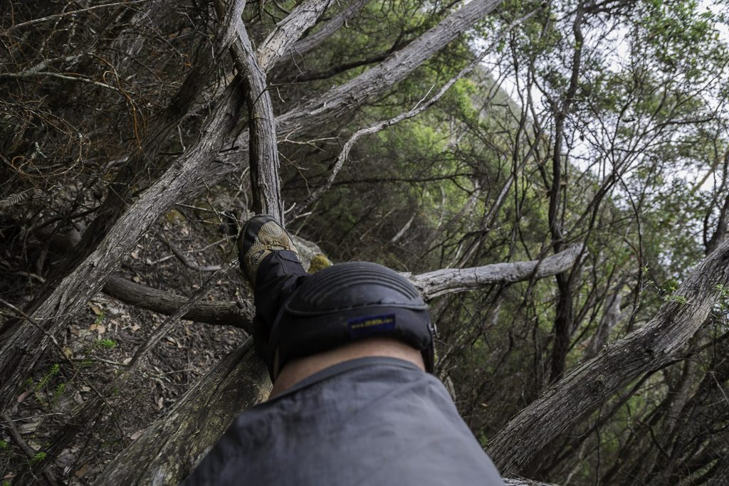 knee-protection-scrub-grampians-national-park