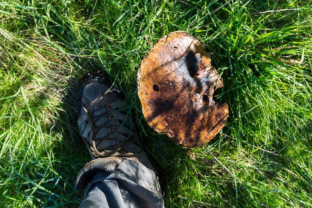 foot-next-to-large-fungi