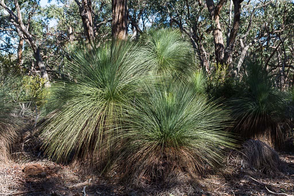grass-trees-burchell-trail
