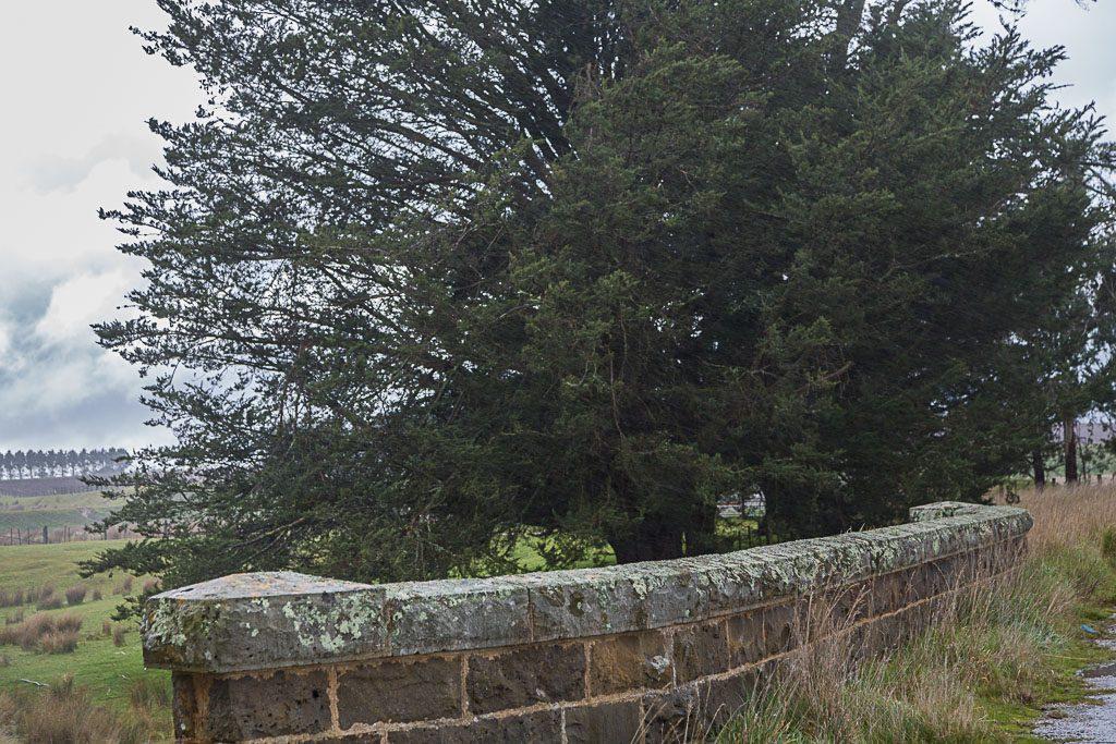 tree-rain-blampied