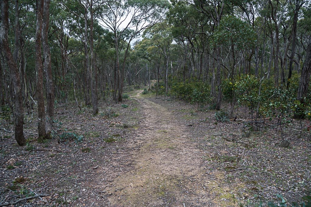 banksia-track-brisbane-ranges-national-park