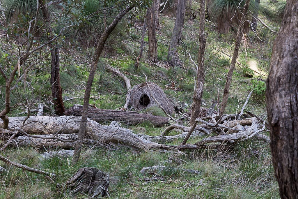 collapsed-grass-tree-brisbane-ranges-national-park