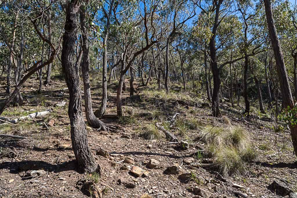 steep-track-slate-gully-burchell-trail