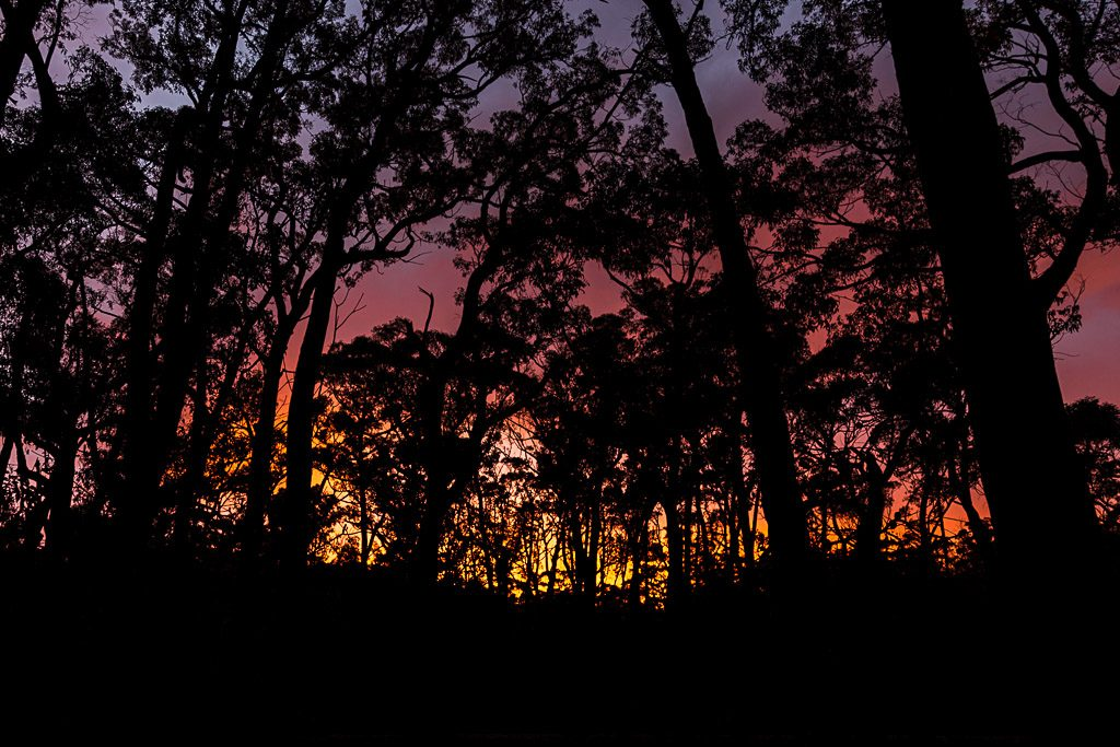 sunrise-trees-grampians