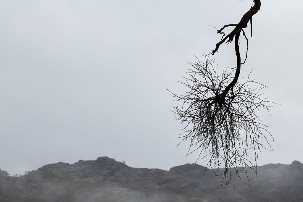bare-tree-branch-grampians