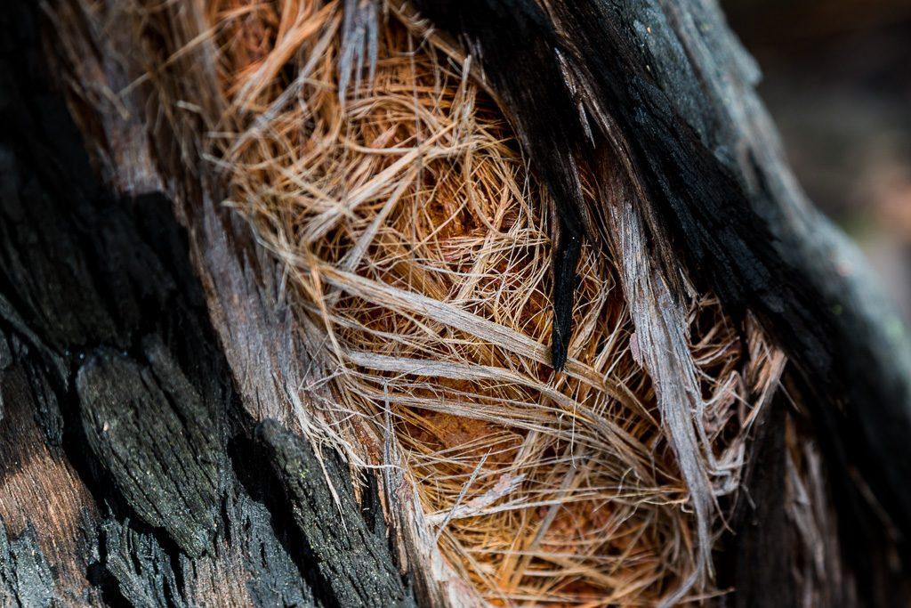 bark-detail-burned-tree