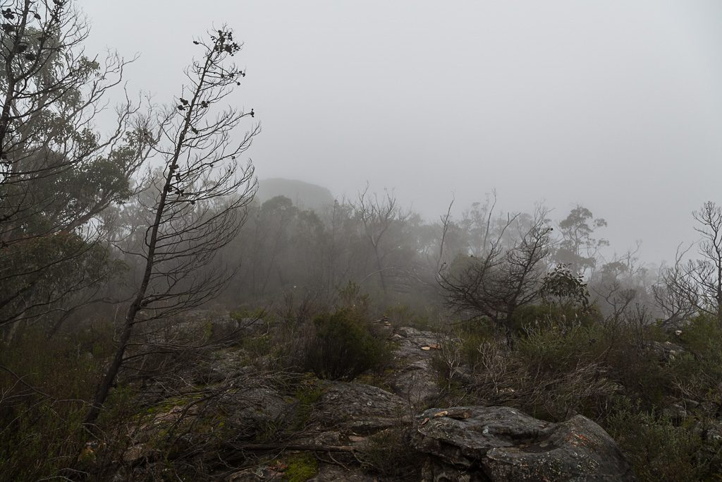 mist-over-fortress-track-grampians