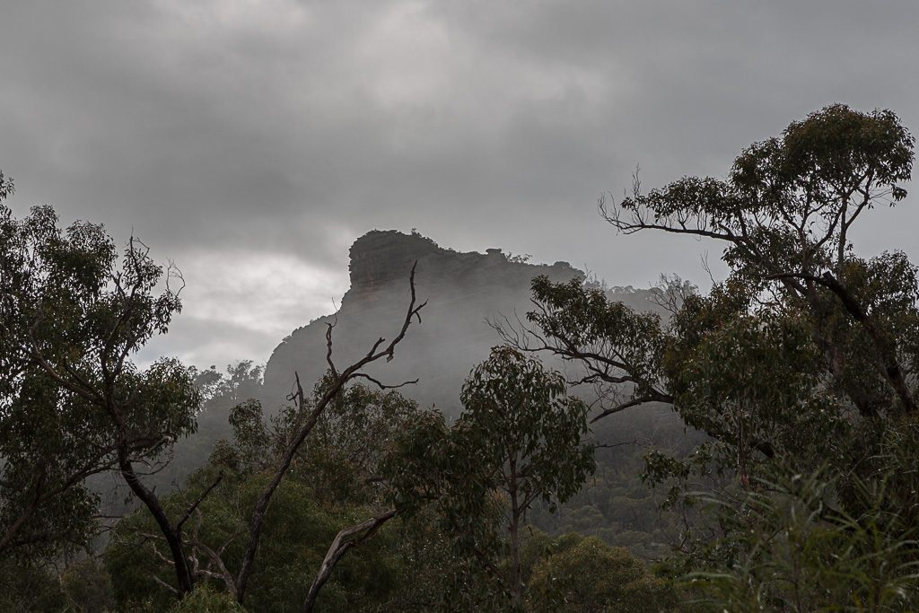 mist-over-trees-grampians
