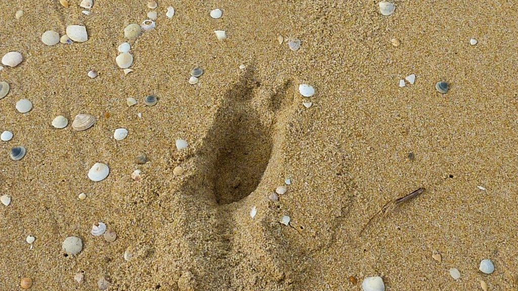 deer-print-beach-croajingolong