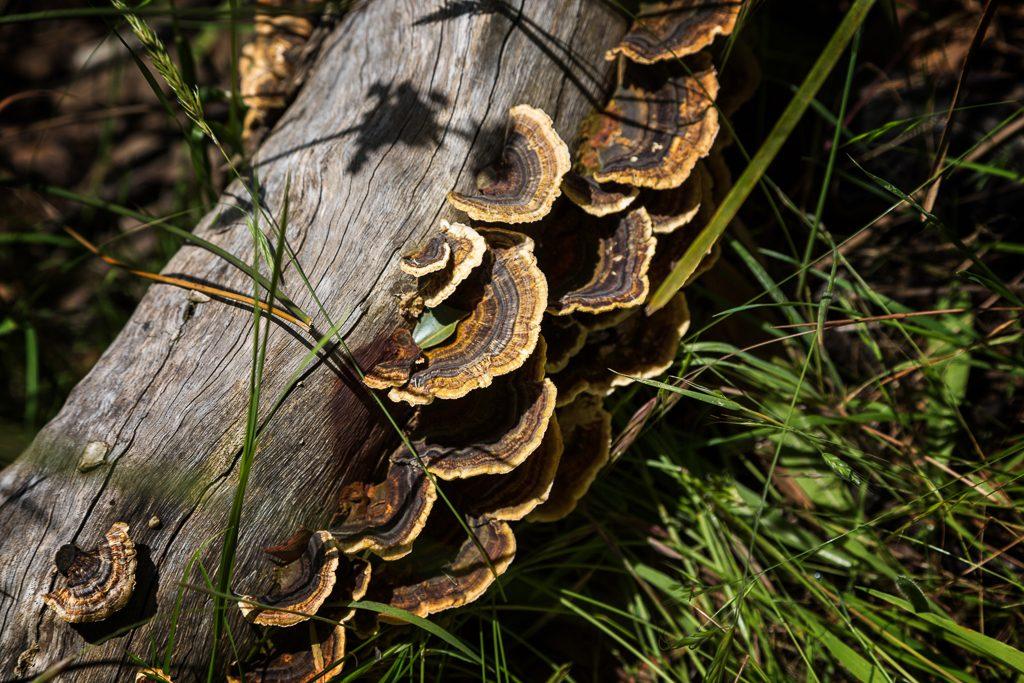 fungi-on-fallen-tree-tarilta-creek