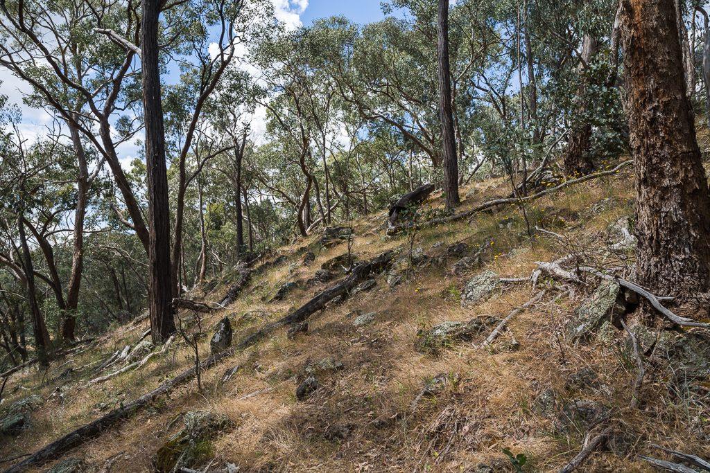 hill-above-lancaster-track-upper-loddon-state-forest