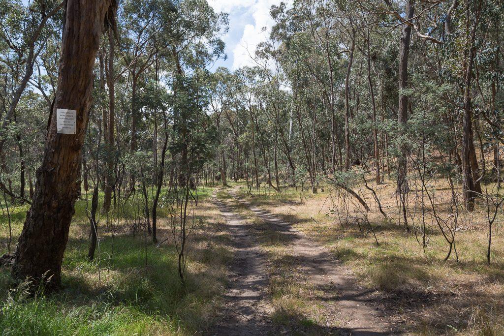 lancaster-track-upper-loddon-state-forest
