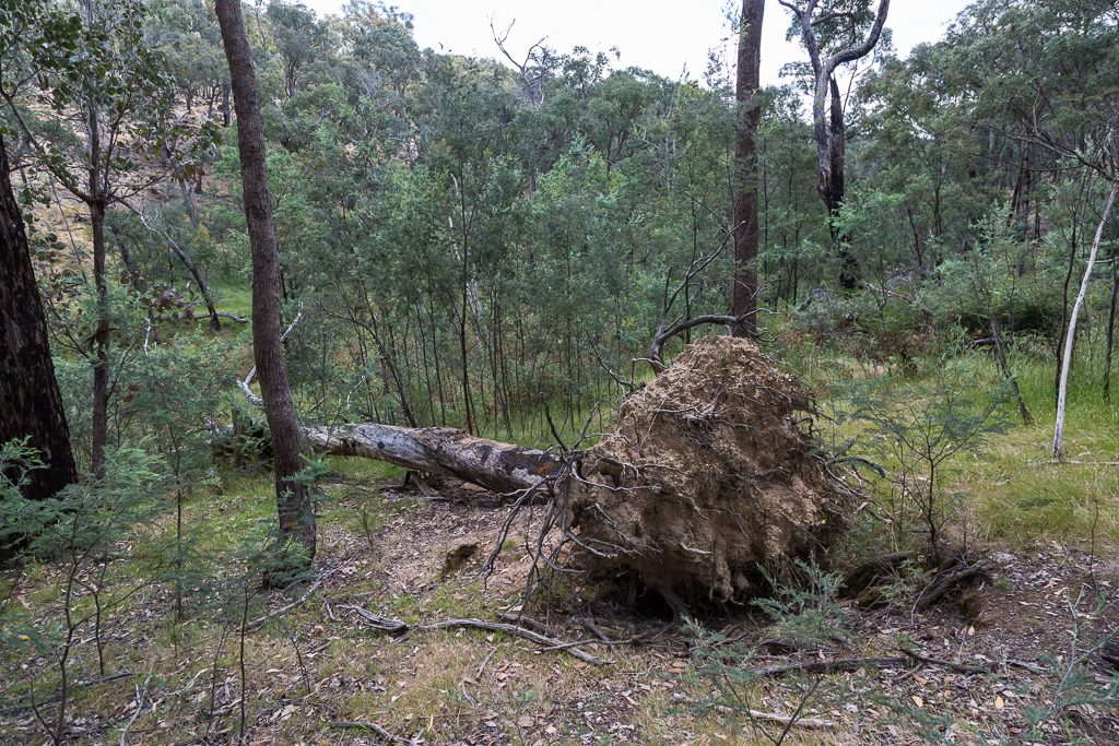 large-fallen-tree-tarilta-creek