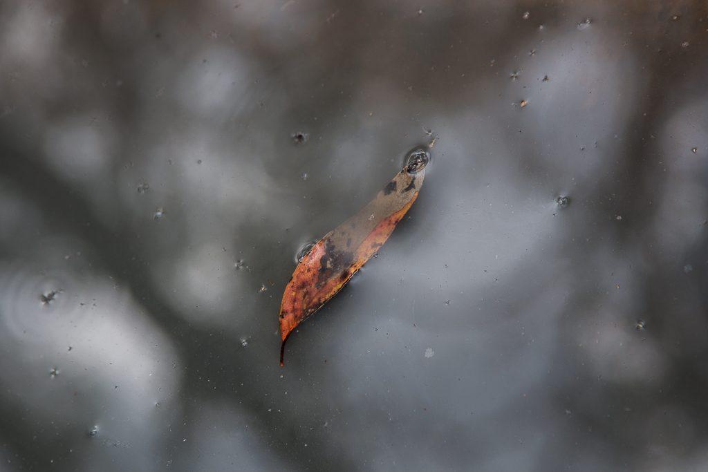 leaf-floating-water