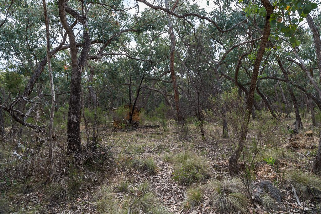 stone-chimney-ruins-in-bush-dry-diggings-track