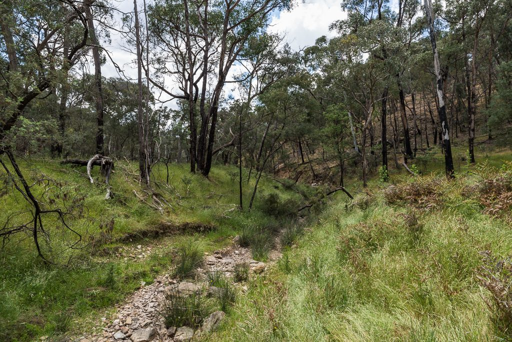 tarilta-creek-upper-loddon-state-forest