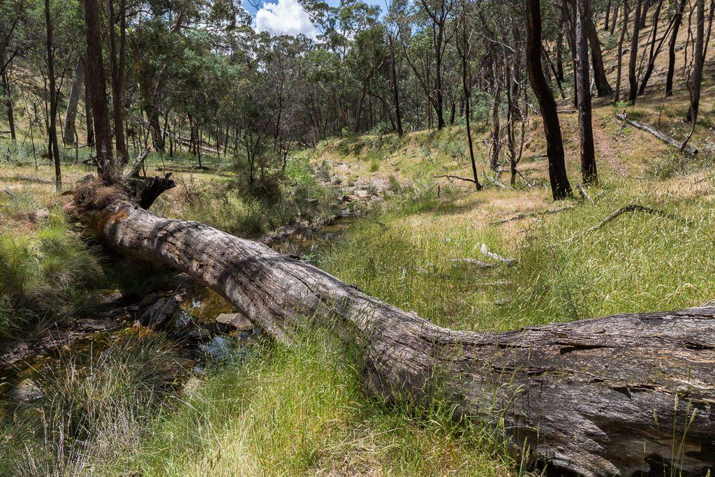 tree-across-tarilta-creek