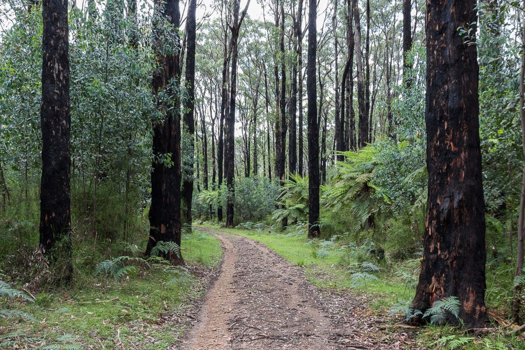 road-3-yarra-ranges-national-park