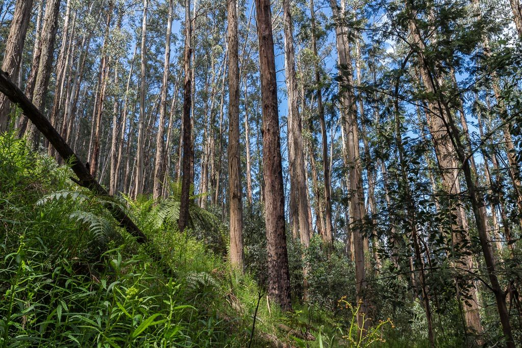steep-slope-mt-juliet-yarra-ranges-national-park