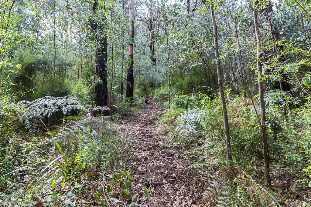track-mt-juliet-yarra-ranges-national-park