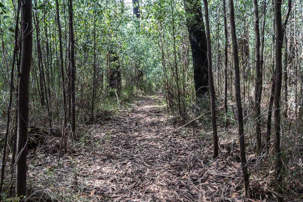 trees-walking-track-mt-juliet-yarra-ranges-national-park