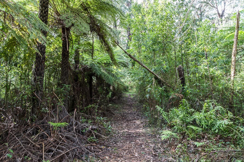 walking-track-mt-juliet-yarra-ranges-national-park