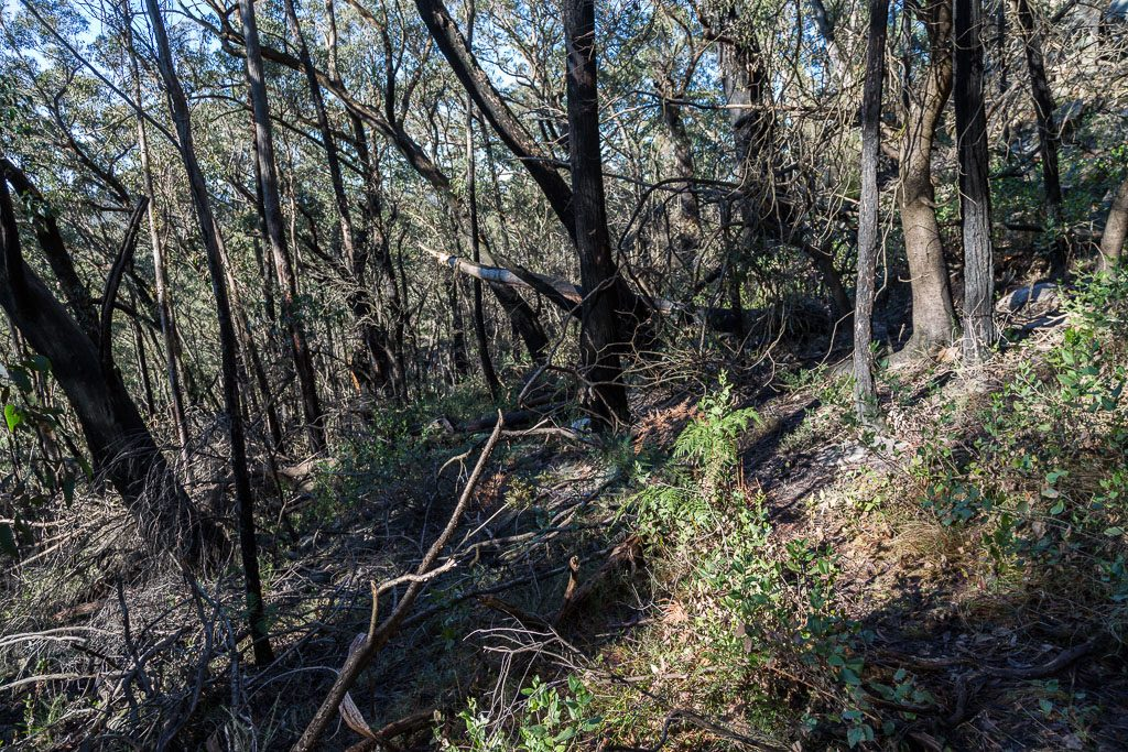descending_fortress_hiker_campsite_grampians