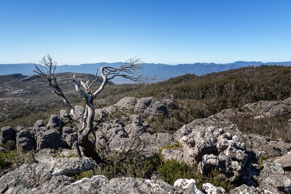 tree_mount_thackeray_grampians