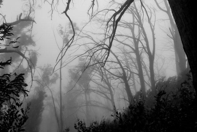 mist-rain-eskdale-spur