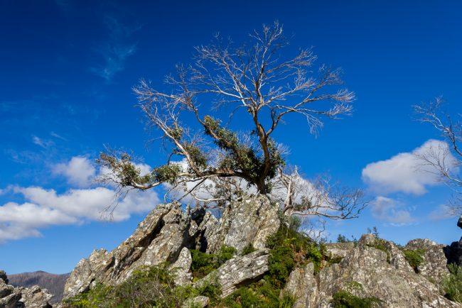 tree-on-razorback-ridge-cathedral-ranges