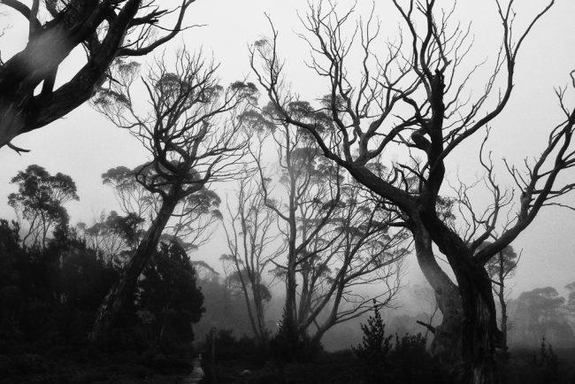 rain-mist-overland-track-tasmania