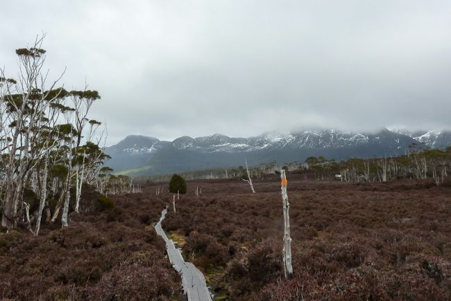 descending-pelion-gap-overland-track