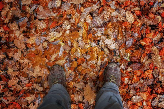 autumn-leaves-daylesford