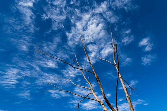 branches-blue-sky