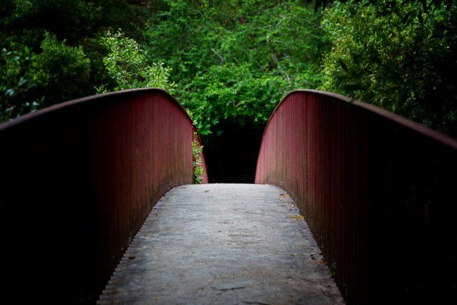 bridge-blackwood-spring