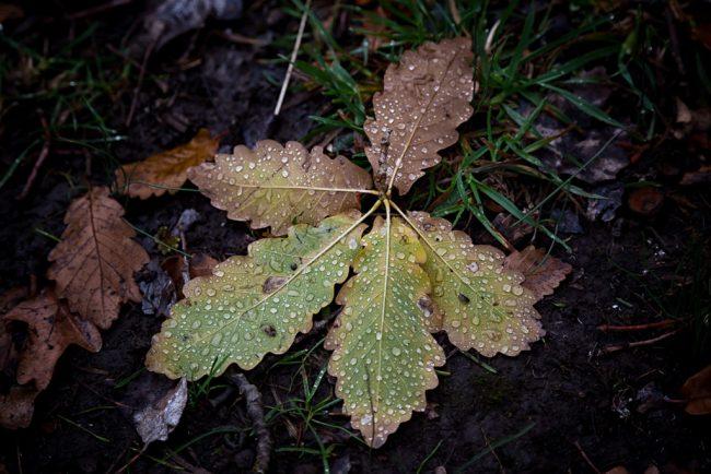 water-droplets-on-leaf