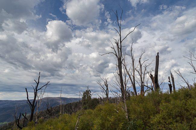 clouds-over-marysville-bushfire-regrowth
