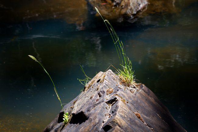 grass-on-rock-pyrete-range