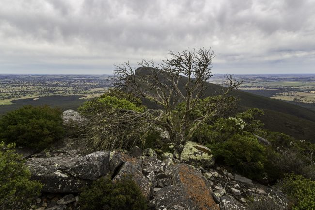 summit-signal-peak-grampians-national-park-3