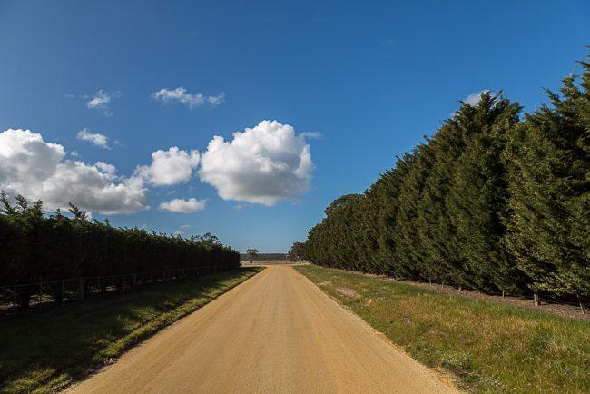 trees-alongside-beremboke-road-beremboke